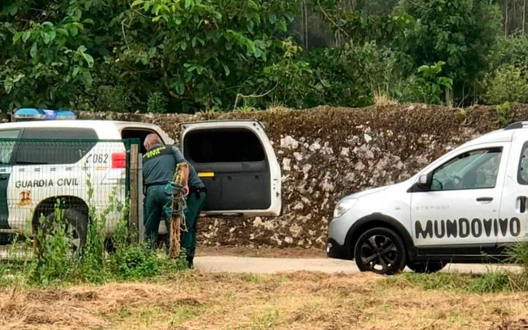 Investigados por maltrato animal los encargados de dos fincas donde aparecieron muertas 20 ovejas y tres cabras