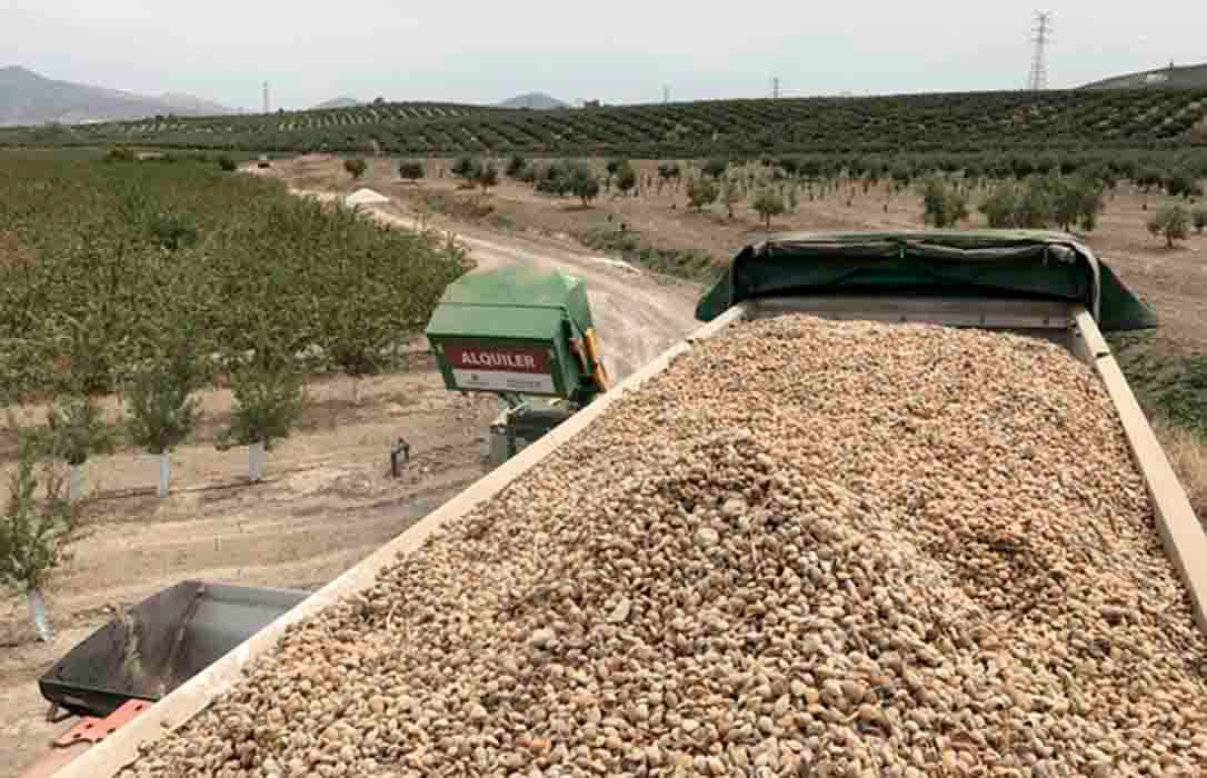 La almendra sigue en caída libre y la ecológica ya se ha situado en cotizaciones de hace un año en esta última semana