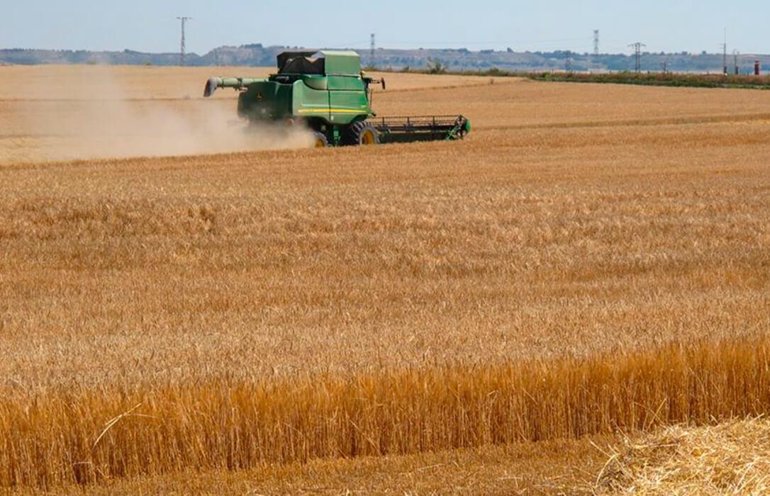 Se venía anunciado y se ha cumplido: Los precios de los cereales cambian de tendencia y comienzan a bajar