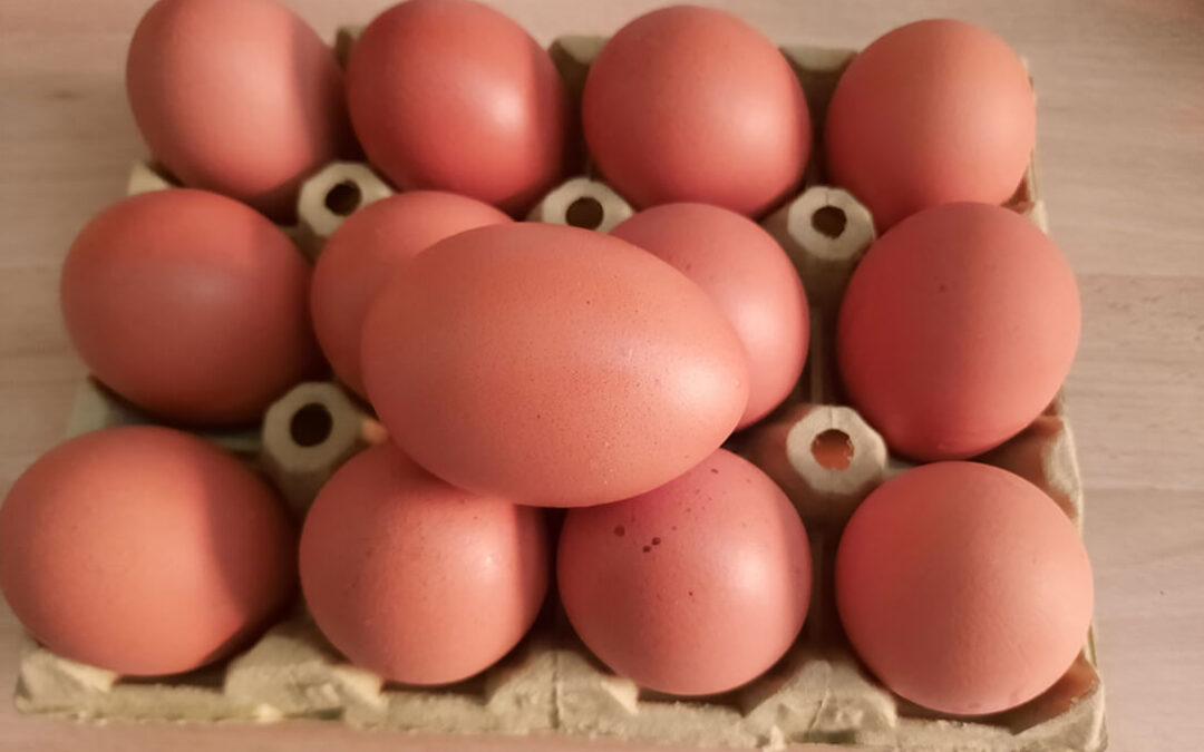 Prorrogada por tres campañas la extensión de norma del huevo que establece 20€ por cada 1.000 gallinas ponedoras comerciales