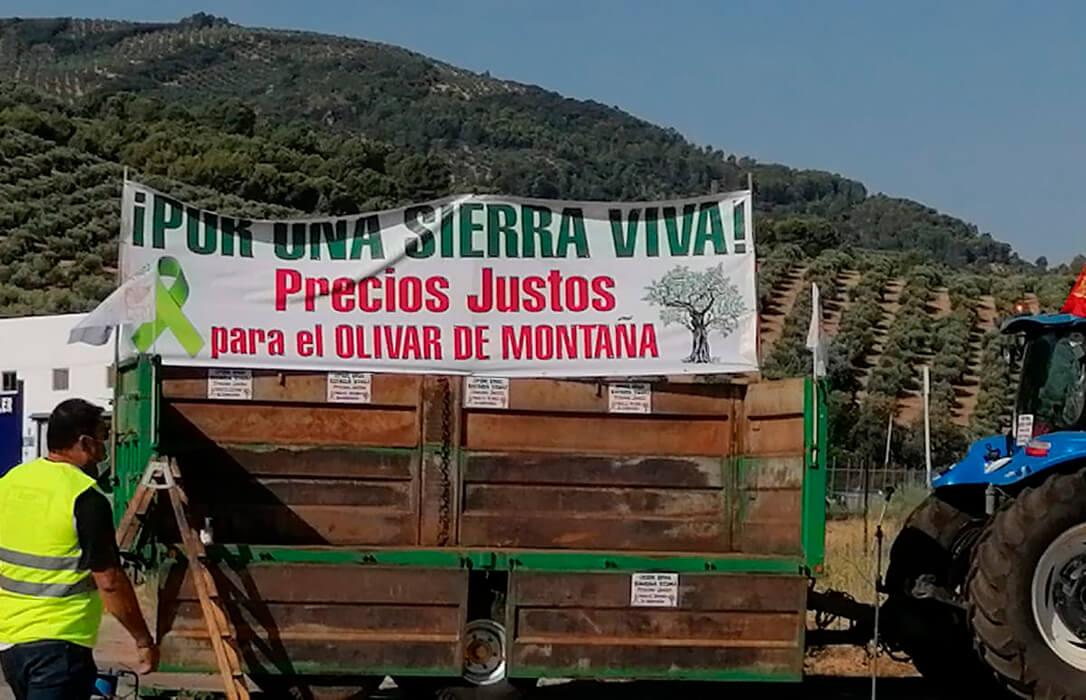Trece municipios protestan en defensa del olivar de la Sierra, aunque deben suspender el acto por una alerta por coronavirus