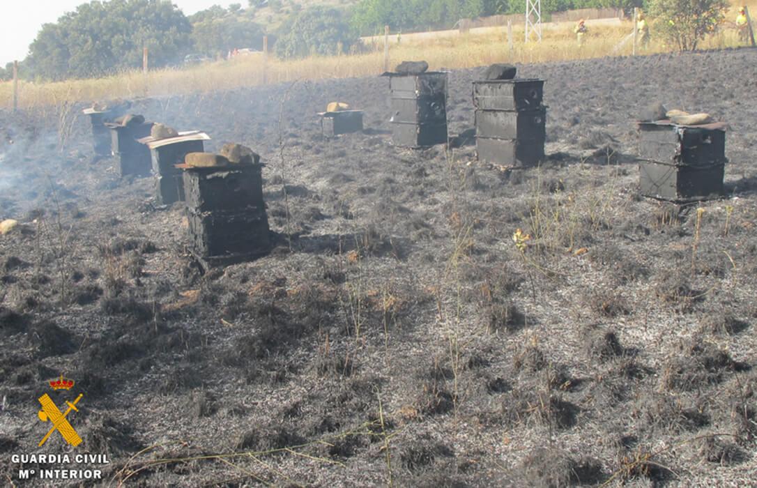 Un incendio forestal arrasa 30 colmenas y enjambres al usar artefactos con cartuchería real para ahuyentar depredadores
