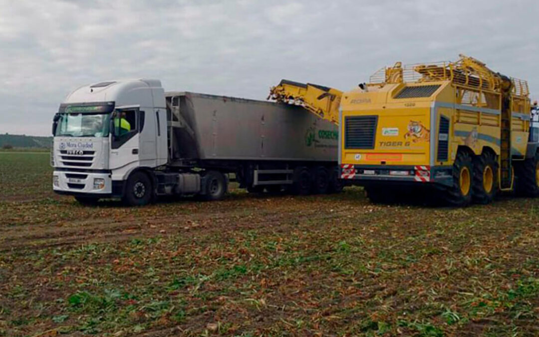 Azucarera cierra la campaña de Andalucía con 477.500 toneladas recogidas de remolacha líquida