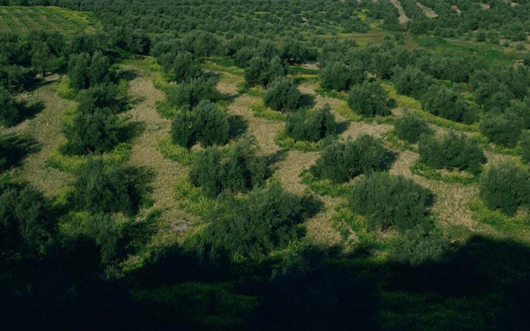 Un problema de plagas en toda Europa: El MAPA pide a la ciudadanía que informe de la recepción de sobres con semillas no solicitadas