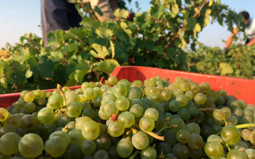 Convocada la primera tractorada de protesta para pedir precios justos para la uva en el arranque de la vendimia