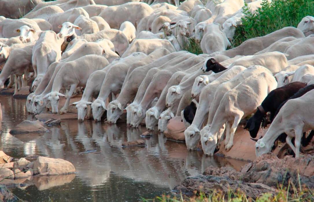 Una PAC que apueste por una ganadería extensiva que recibe el 260% menos de ayuda que un agricultor por hacer lo mismo