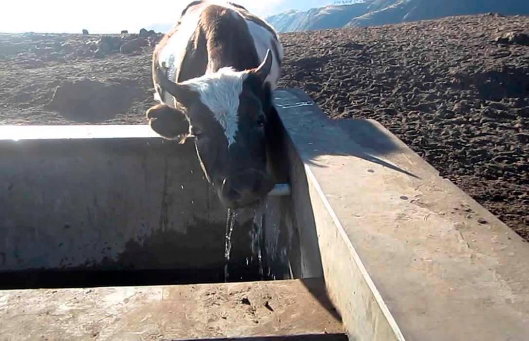 Una paradoja que se debe solventar: Laganadería extensiva produce agua y sin embargo no tiene para beber
