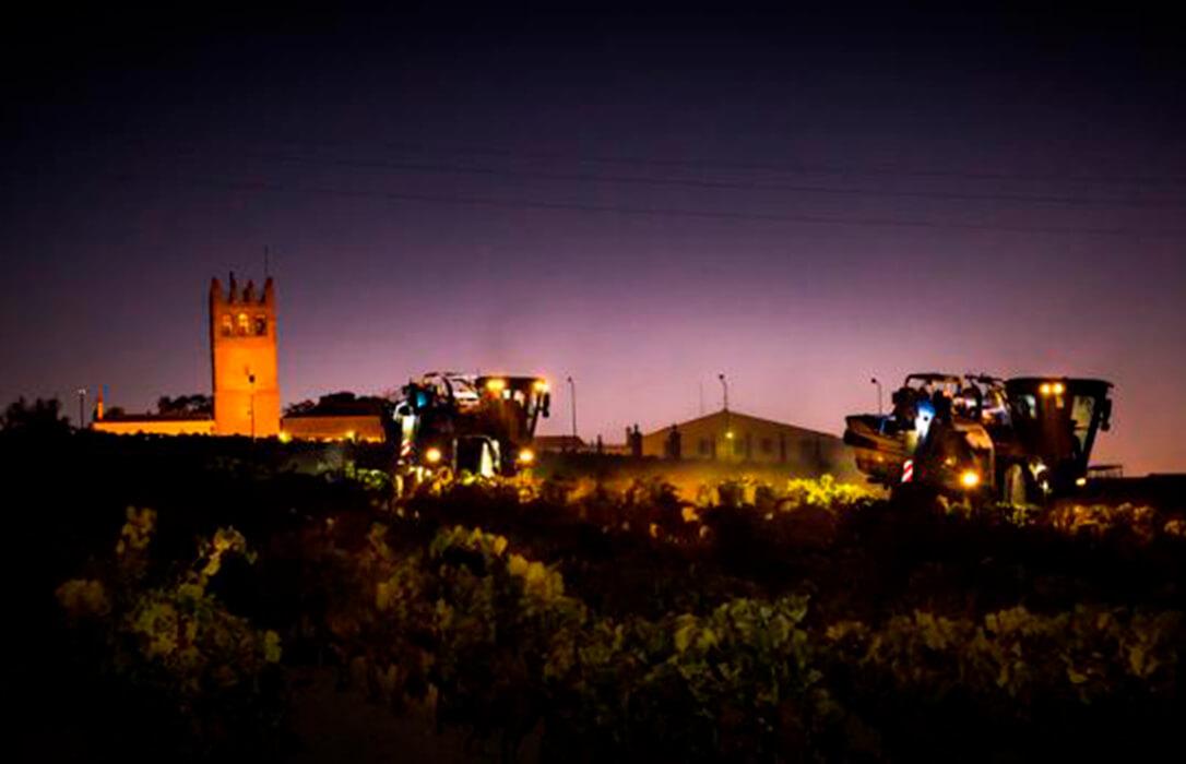 Las bodegas del Marco de Jerez inician una vendimia temprana, difícil, cara y con nocturnidad