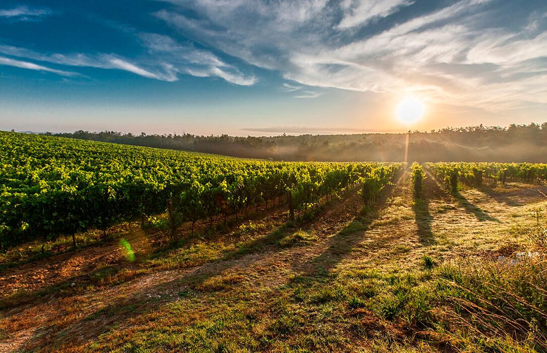 El Ministerio reconoce 19 nuevos viñedos singulares de la DOCa Rioja, ocho en Álava y otro en Navarra