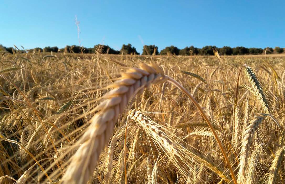 El cambio de tendencia a la baja en el precio de los cereales ya es una realidad, con nuevos descensos en las cotizaciones