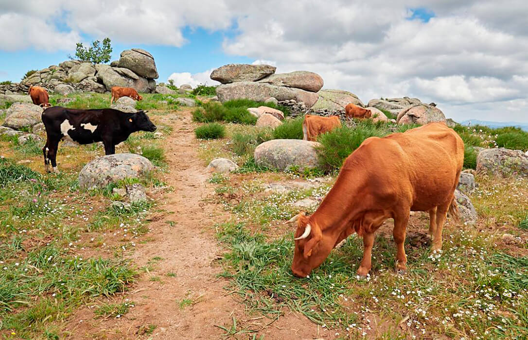 CLM abona a 11.500 agricultores y ganaderos de zonas de montaña y con limitaciones naturales 18,6 millones del PDR de 2019
