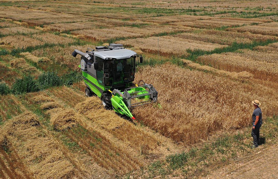 Año de contradicciones y de excelentes cosechas: Por primera vez el cereal de secano mejora su producción respecto al de regadío