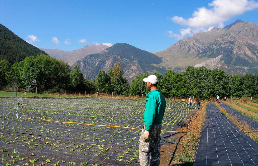 Se creará un bono verde: Europa se abre a permitir que haya más ayudas estatales para impulsar los proyectos ecológicos