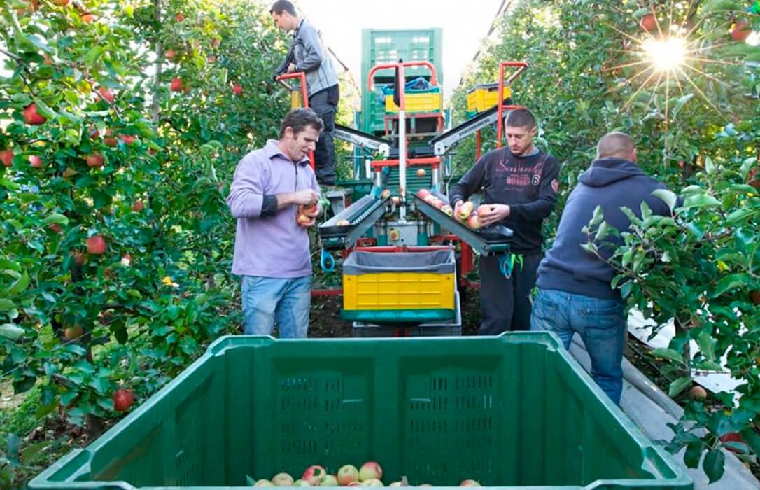 En nueve años se ha destruido en la C. Valenciana una superficie cultivada de frutales de verano equivalente a casi 10.000 campos de fútbol