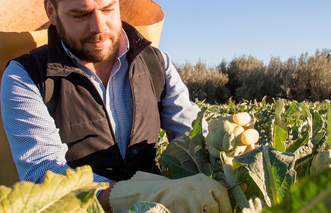CCAA eficientes y otras, no tanto: Los agricultores de Castilla y León han cobrado el 98% de las ayudas de la PAC 2019 y en Murcia, solo el 70%
