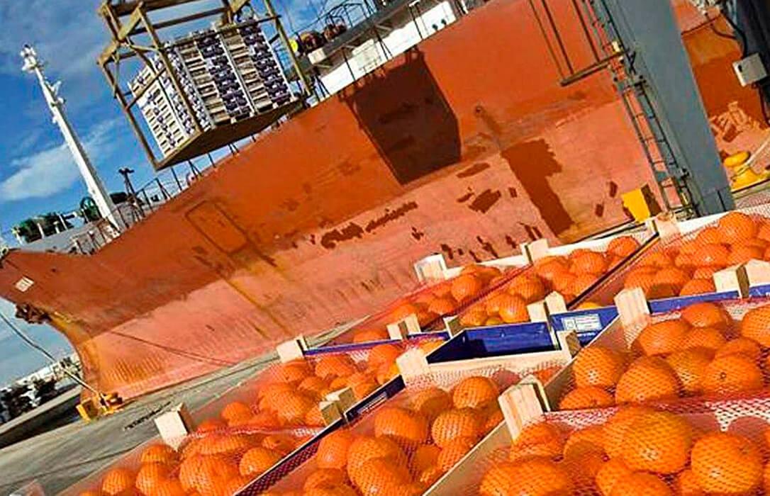 La plaga que más duele al sector: Detectan por segundo año cítricos importados en supermercados con pesticidas prohibidos