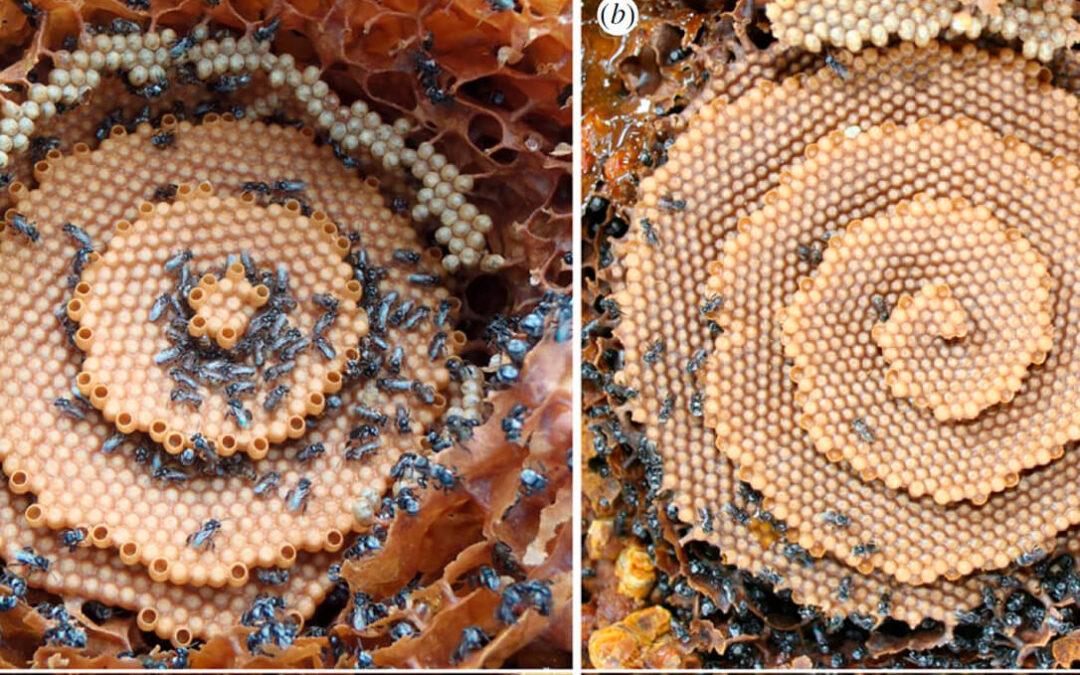 Desvelan uno de los secretos de la naturaleza: Qué patrones matemáticos siguen las abejas para fabricar sus perfectos panales