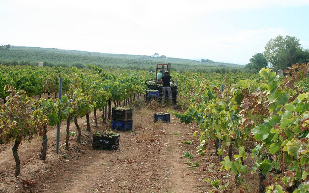 Acuerdo para convocar elecciones en la DO Valdepeñas pero no en el precio de la uva tras tres días de paro en la vendimia