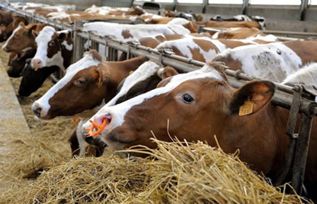 Nueva presidenta de COPA-COGECA: «La nueva política alimentaria de la CE debería revisarse si afectará negativamente a los agricultores»
