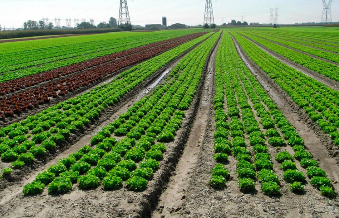 Cátedra en Sostenibilidad de la Producción Integrada de Plantas de la mano de Corteva y la Universidad Politécnica de Madrid