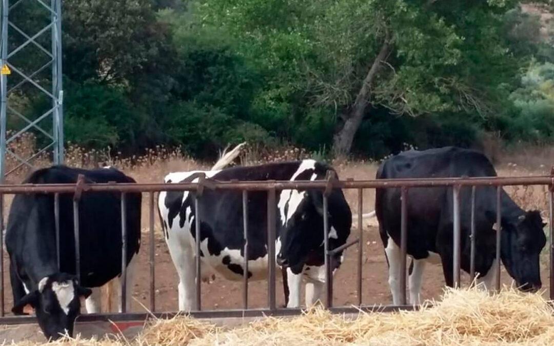 ENTREVISTA. Fenil: «A la industria láctea no le consta el cierre lecherías por falta de rentabilidad y por no cubrir costes»