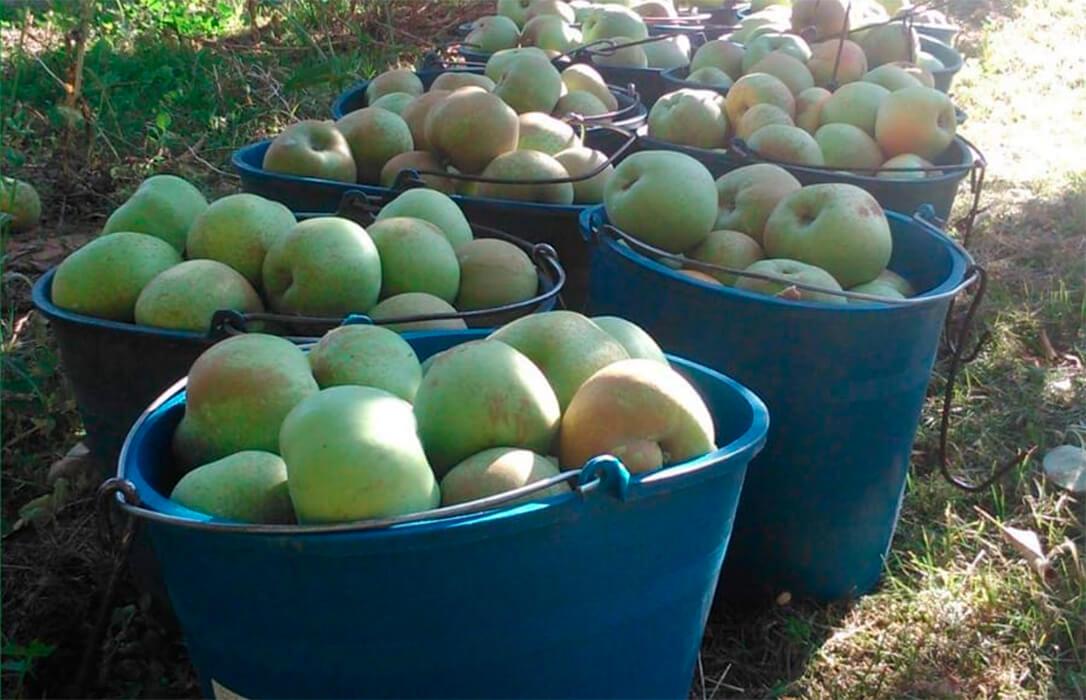 La Feria de la Fruta del Manubles será en formato on-line con una propuesta variada y con la reineta del Manubles de protagonista