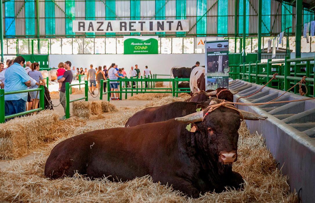 Zafra celebrará en octubre la I Feria Internacional Ganadera Virtual para liderar el concepto de ganadería 4.0 a nivel nacional