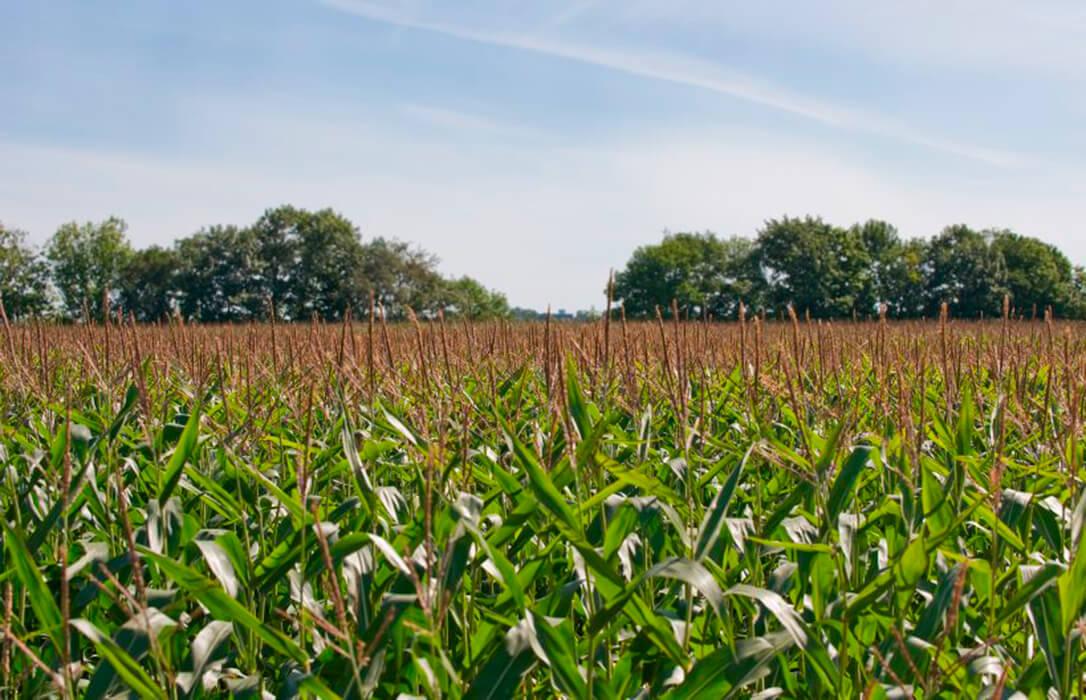 El cambio de actitud de Francia con los neonicotinoides reabre el debate sobre la prohibición del uso de las herramientas de sanidad vegetal