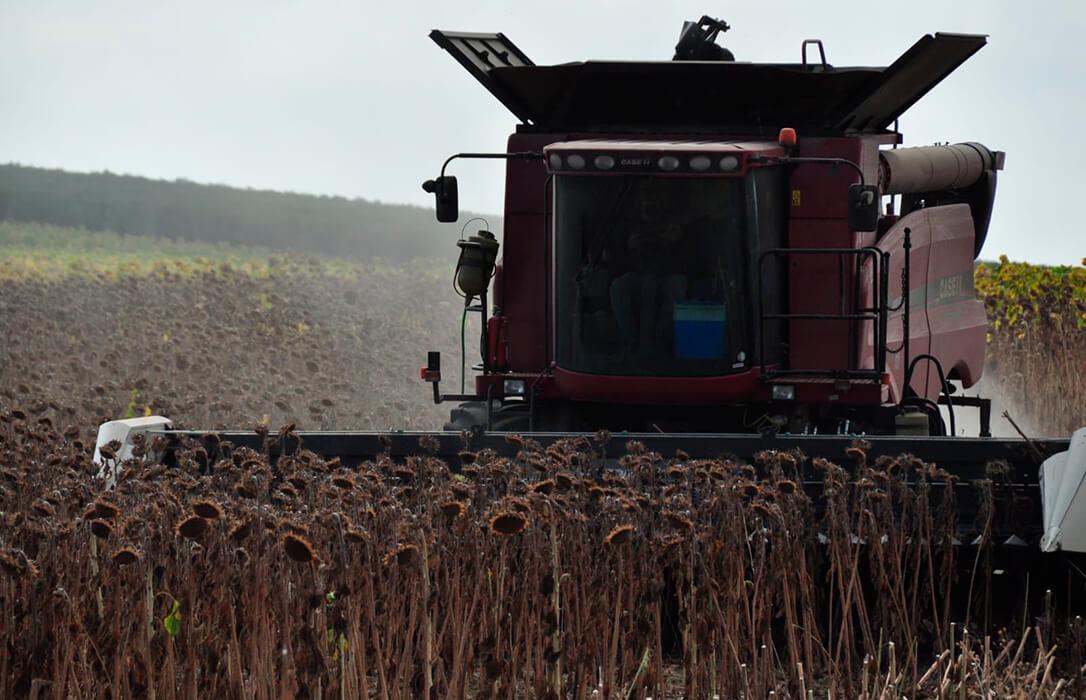 Piden prudencia a la hora de vender la cosecha de girasol en CyL porque en Europa se están disparando lo precios