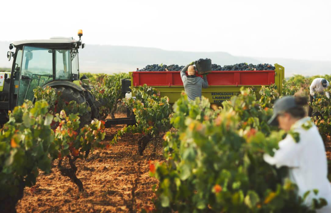 La otra consecuencia de la venta a pérdidas: Se están perdiendo miles de hectáreas cultivadas en la última década por la falta de rentabilidad
