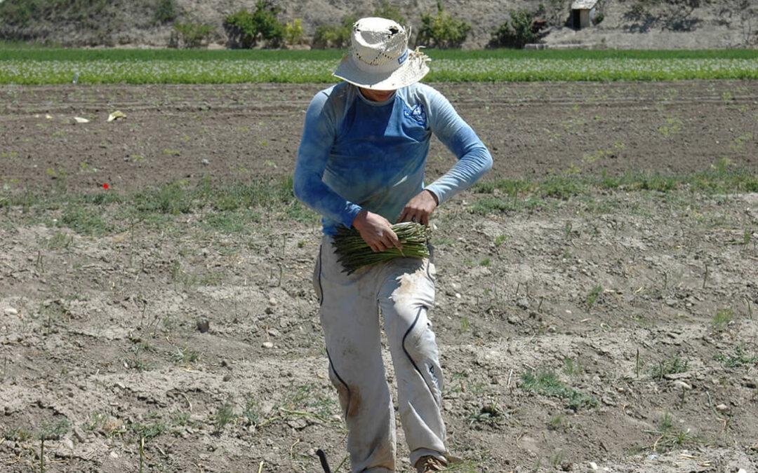 9 de Septiembre: Precios Justos en el Día Mundial de la Agricultura