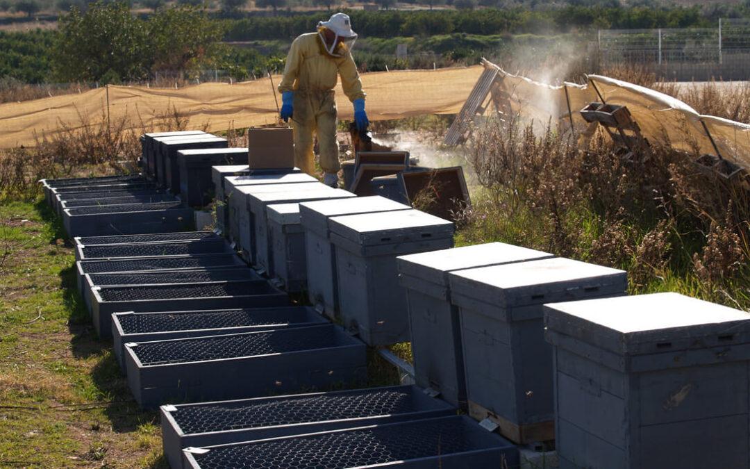 Tras los malos datos de la miel clara, el clima lastra una campaña que cae un 10% y se sitúa en solo el 30% de las cifras anuales medias