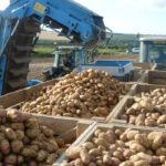 La Junta otorga el reconocimiento oficial a la nueva Interprofesional de la patata Castilla y León