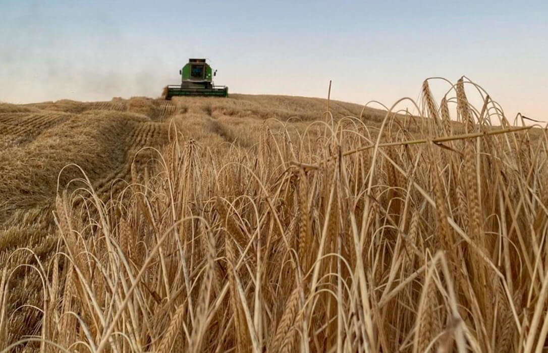 Los precios mayoristas de los cereales mantienen su tendencia al alza salvo, como casi siempre, el trigo duro