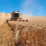 Se mantiene la subida de precios en el cereal en la Lonja de León pero se empieza a dar síntomas de tranquilidad