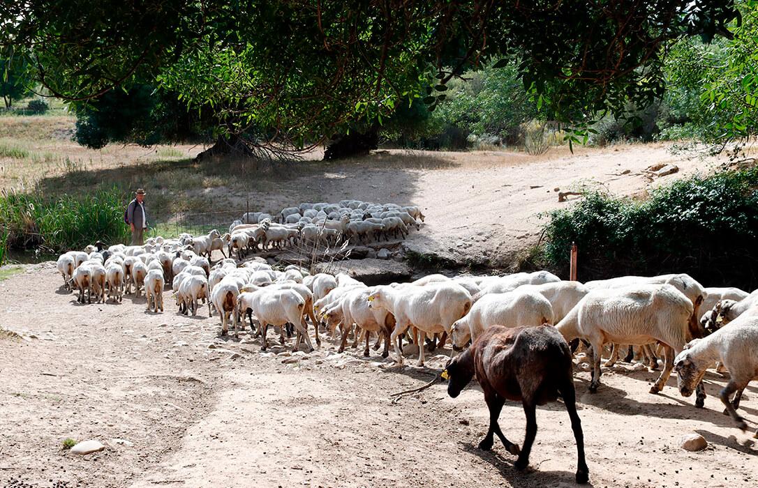 Los agricultores y ganaderos de Madrid se sienten abandonados y olvidados ante la pandemia provocada por el Covid