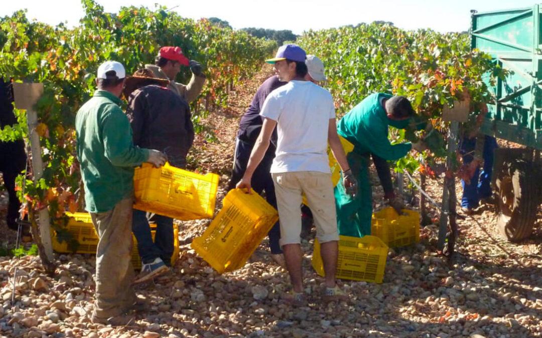 El MAPA deja en manos del sector la solución a la crisis del vino y baraja aumentar del 10 al 15% el volumen de alcohol de los subproductos