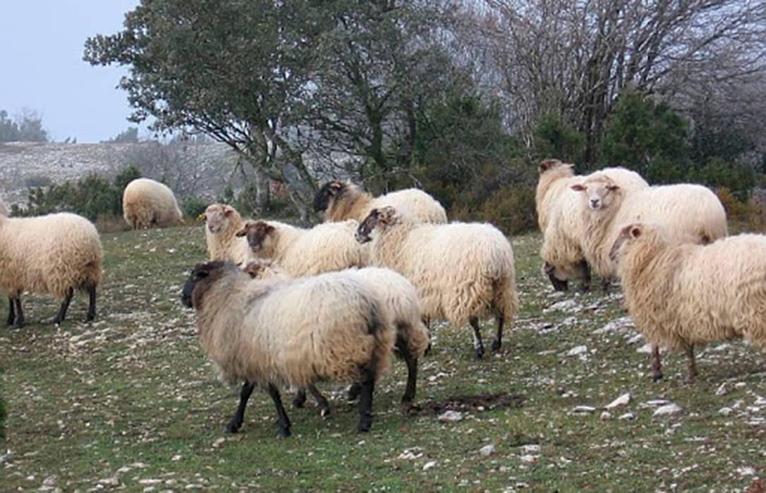 Nuevas CCAA, como La Rioja y el País Vasco, se suman al abono del adelanto de la PAC para más de 11.000 agricultores