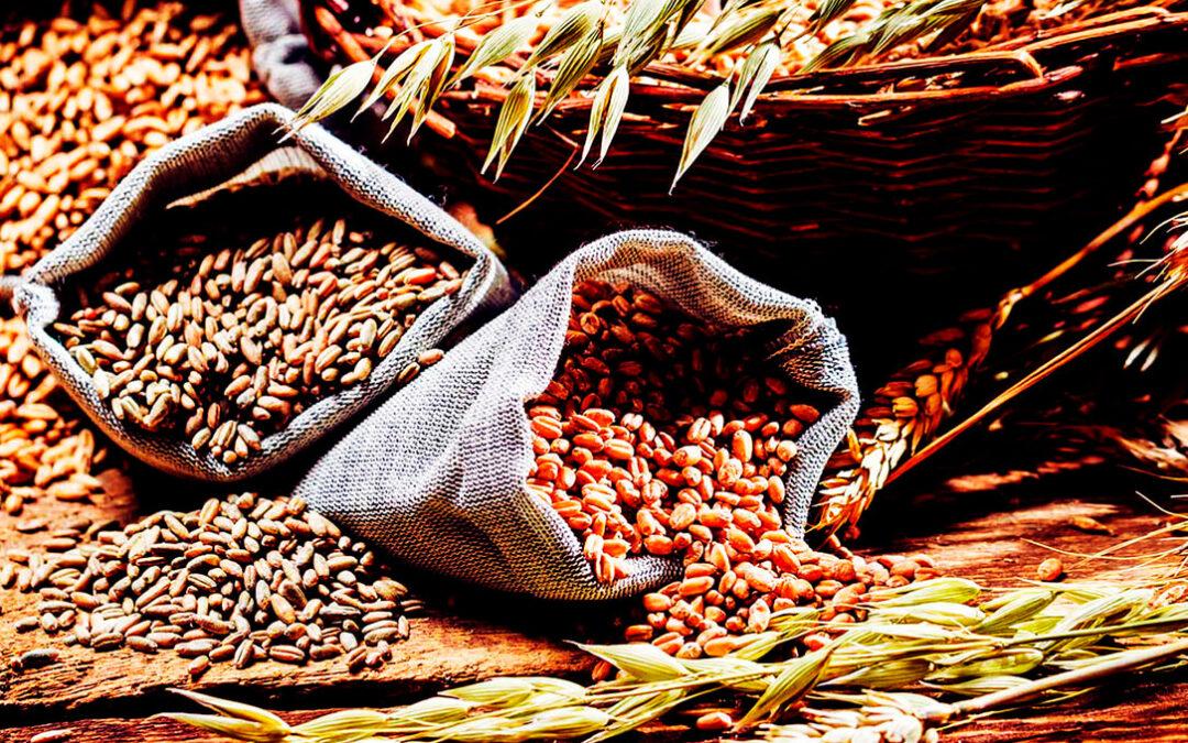 Debate abierto sobre el presente y el futuro del sector cerealista y de las leguminosas en las Jornadas Técnicas de la AETC