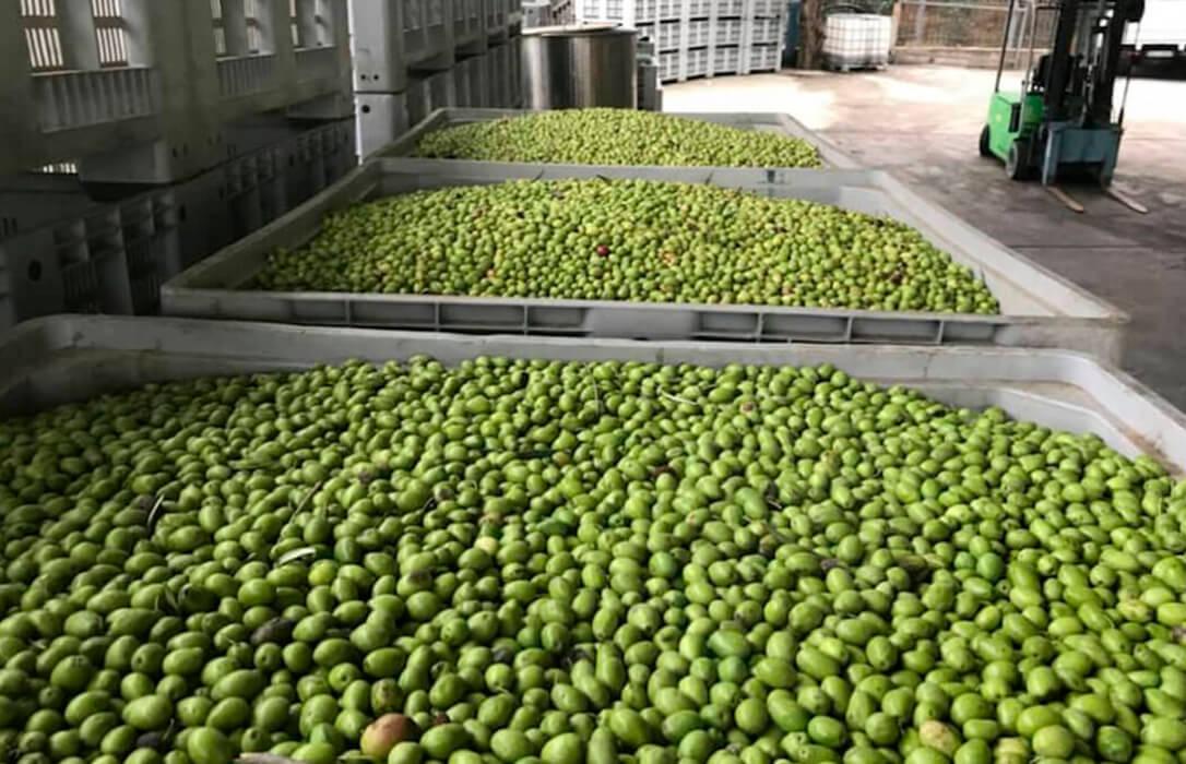Guerra aranceles UE-EEUU: Piden usar la resolución de la OMC contra EEUU para negociar su retirada a los productos agrarios