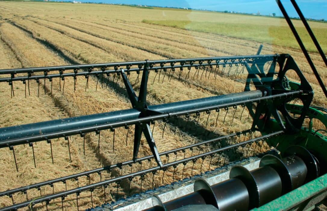 La Conselleria valenciana se compromete a prorrogar un año más la ayuda agroambiental del arroz