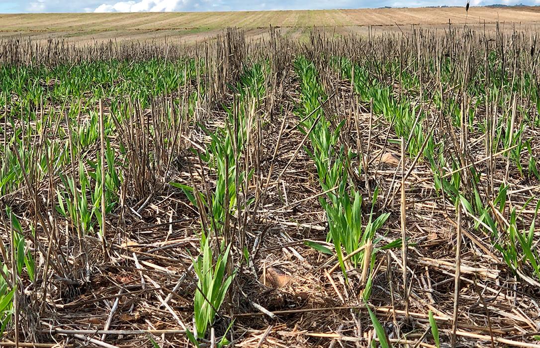 Cinco países se unen para frenar el deterioro del suelo agrícola al apostar por la cooperación para intercambiar y divulgar buenas prácticas