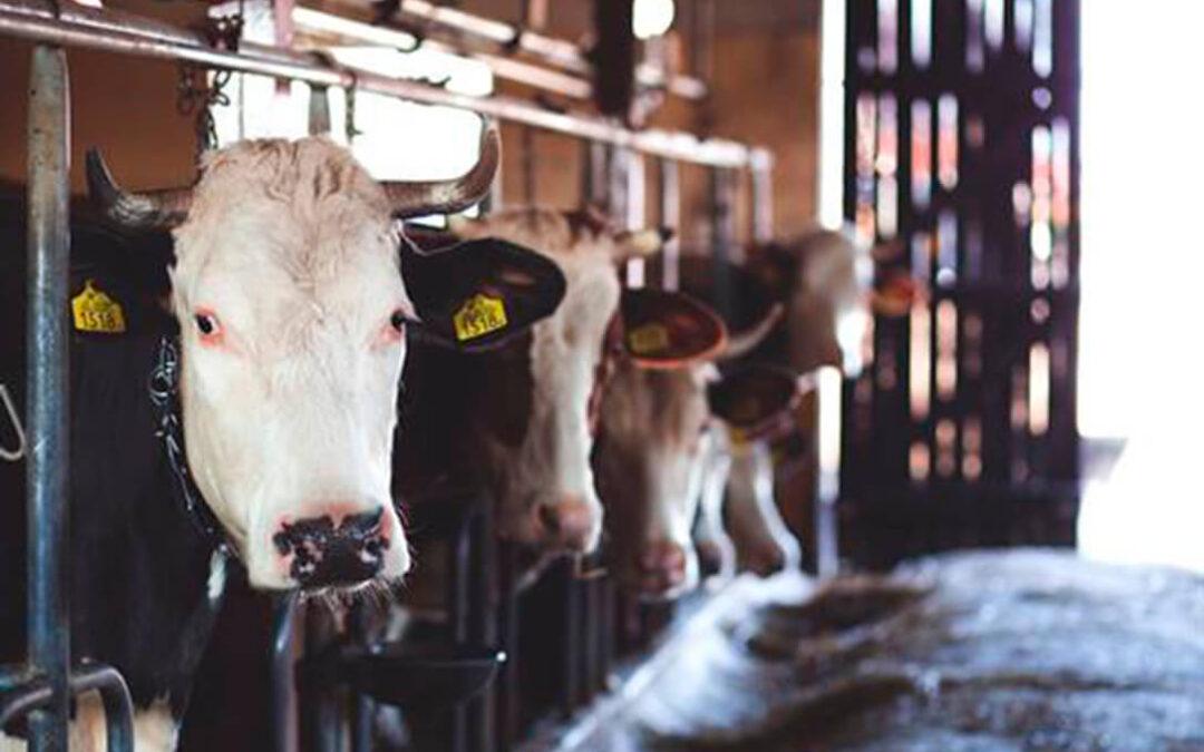 Consumo presenta a consulta pública el real decreto para la instalación de cámaras de videovigilancia en todos los mataderos