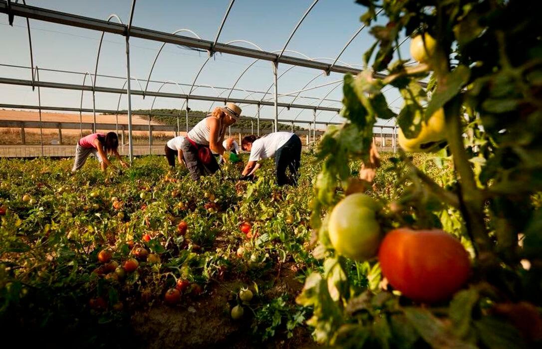 La PAC Verde: La Comisión Europea promoverá las compras públicas de alimentos ecológicos para inentivar su cultivo