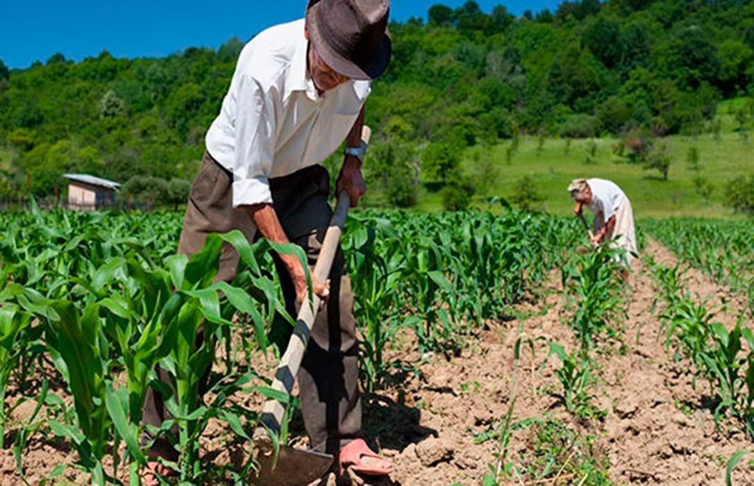 No se perderá ni un euro con los ecoesquemas: El dinero no gastado en ellos se destinará íntegramente a la renta agraria de la PAC