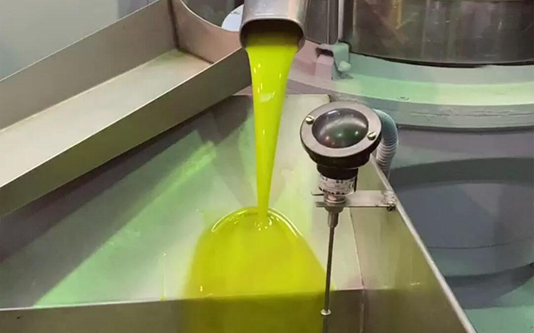 Aceite de oliva: Organizaciones y cooperativas no comparten el aforo de la Junta y creen que será menor y piden autorregulación y precios justos