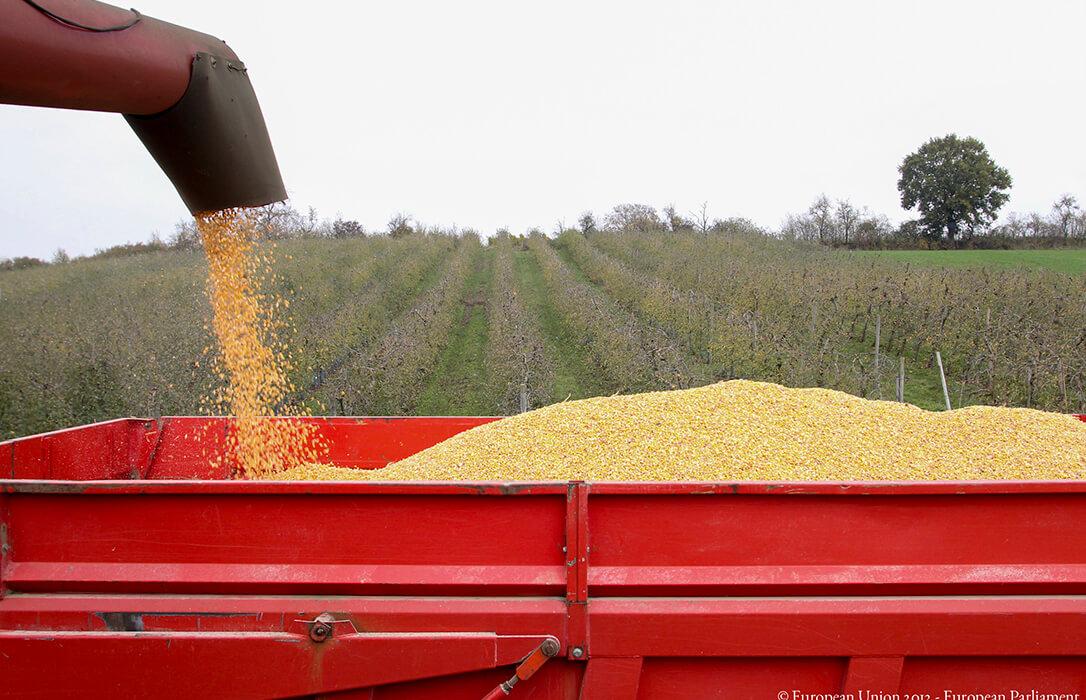 Qué pide la Eurocámara para la PAC: Renta agraria, ecoesquemas voluntarios y compensar el 10% perdido en el presupuesto