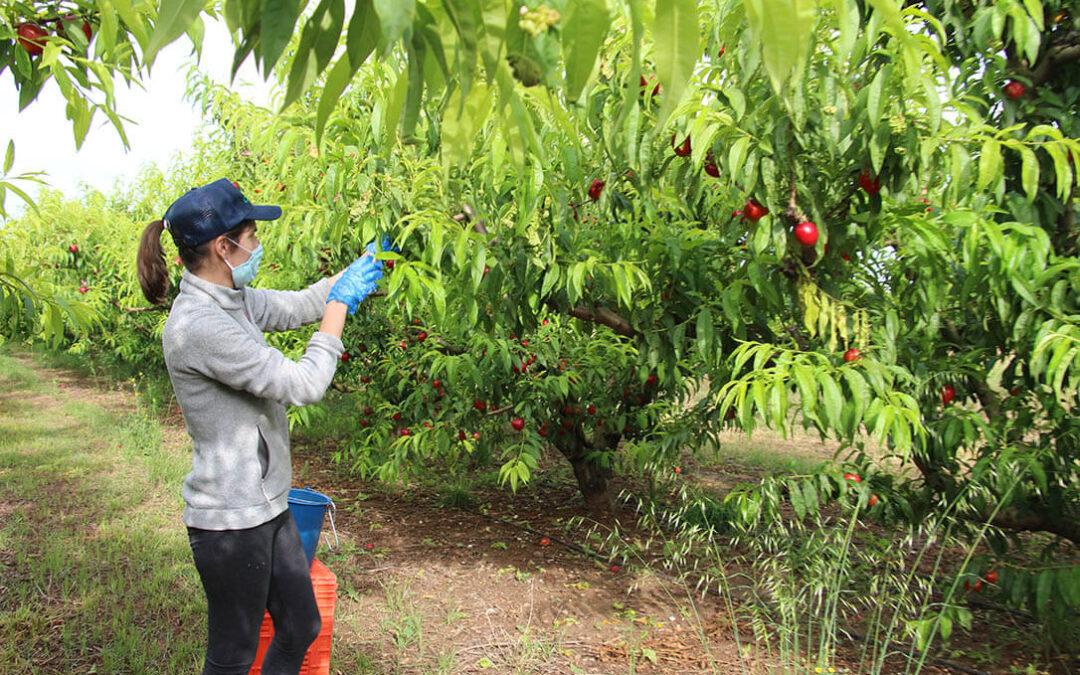 La Eurocámara reclama más fondos de recuperación para la agricultura y que los pagos comiencen este mismo año