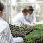 El trabajo de las ingenieras agrónomas es necesario para garantizar la sostenibilidad y el futuro en las explotaciones agrarias