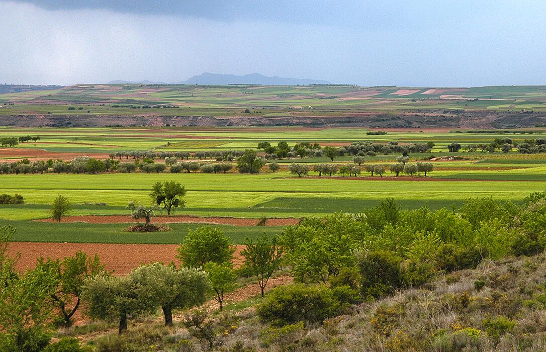 La Rioja pagará este viernes 14,57 millones de euros de los anticipos de las ayudas directas de la solicitud de la PAC 2020